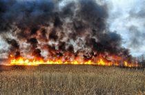 В Таразе сгорела новая бургерная, а в районах горят зерновые поля