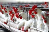 Цены на яйца понизились в Таразе