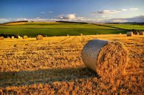 В 2,5 раза обещают увеличить доходы сельчан в Жамбылской области