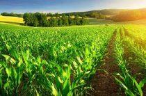 «День поля» прошел в Жамбылской области